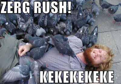 Pigeon Zerg Rush - SlightlyQualified.com