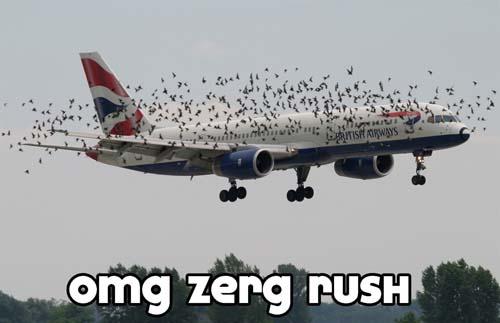Zerg Rush Airplane - SlightlyQualified.com