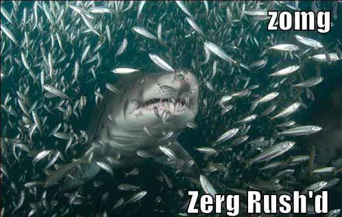 Underwater Zerg Rush Shark - SlightlyQualified.com
