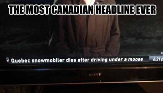 Funny Canada Meme Moose News Cast - SlightlyQualified.com Funny Memes and Funny Pics