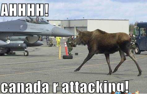 Funny Canada Moose Attack Pic - SlightlyQualified.com Funny Pics and Memes