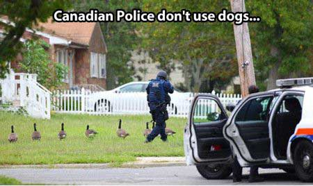 Funny Canadian Police Pic - SlightlyQualified.com Funny Memes