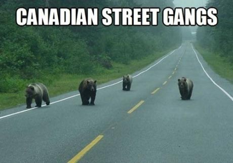 Canadian Street Gangs Funny Pic - SlightlyQualified.com Funny Pictures, Funny Videos and Memes